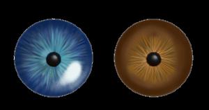 lentilles colorisees danger